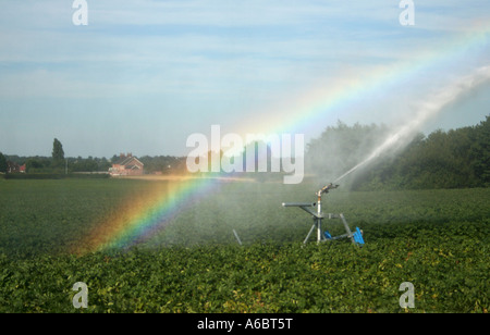 Irrigation Pump: Rainbow Irrigation Pump on
