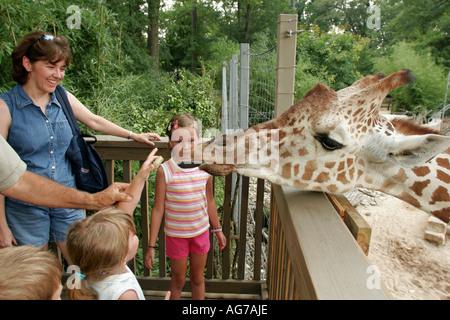 Alabama Birmingham Zoo. giraffe feeding children trainer - Stock Image