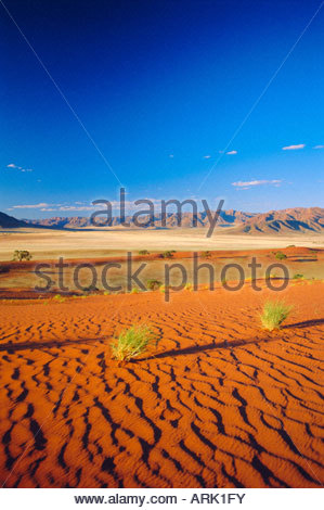 Namib, Namibia - Stock Image