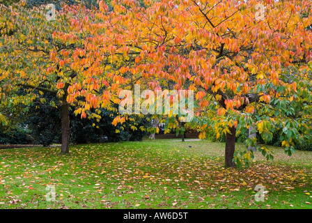 Terrific Autumn Kensington Gardens Trees Stock Photos  Autumn Kensington  With Remarkable Autumnal Coloured Leaves On The Trees In Kensington Gardens London  Stock  Image With Nice Garden Route Horse Trails Also Garden State Film In Addition Garden Tool Chest And Building A Raised Garden Bed As Well As Tamar View Garden Centre Additionally Hydroponic Garden Plans From Alamycom With   Remarkable Autumn Kensington Gardens Trees Stock Photos  Autumn Kensington  With Nice Autumnal Coloured Leaves On The Trees In Kensington Gardens London  Stock  Image And Terrific Garden Route Horse Trails Also Garden State Film In Addition Garden Tool Chest From Alamycom