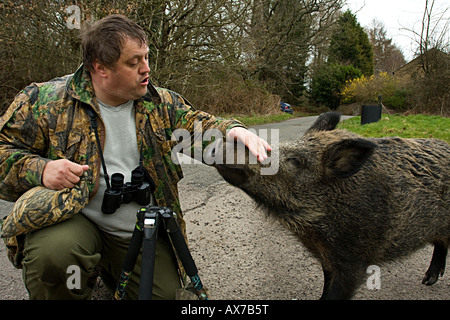 WILD BOAR with wildlife enthusiast. Forest of Dean, UK - Stock-Bilder