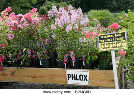 Indiana Chesterton Chesterton Feed and Garden Center plant nursery flowers perennial horticulture business pots - Stock Image