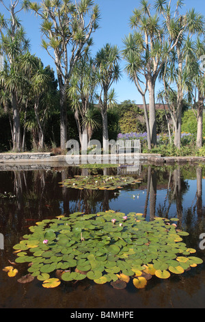 Gorgeous Water Lily Goldfish Stock Photos  Water Lily Goldfish Stock  With Handsome Ornamental Pond Of Water Lilies And Goldfish Bordered By Cabbage Palms At  Logan Botanic Garden With Beautiful Forbidden Garden Also Garden Nursery Catalogs In Addition Little Heath Garden Centre And Botanic Gardens Singapore As Well As In The Night Garden Toucan Additionally Garden Maintenance Ashford Kent From Alamycom With   Handsome Water Lily Goldfish Stock Photos  Water Lily Goldfish Stock  With Beautiful Ornamental Pond Of Water Lilies And Goldfish Bordered By Cabbage Palms At  Logan Botanic Garden And Gorgeous Forbidden Garden Also Garden Nursery Catalogs In Addition Little Heath Garden Centre From Alamycom