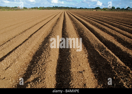 a ploughed field near ormskirk in lancashire,england,uk - Stock Image