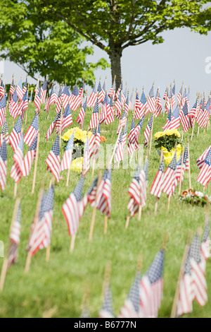 American flags in a cemetery - Stock-Bilder