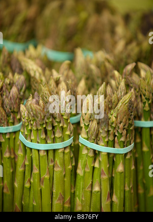 food, asparagus, - Stock Image