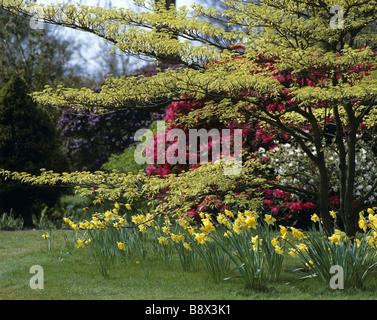 Mesmerizing Emmetts Garden Stock Photos  Emmetts Garden Stock Images  Alamy With Hot A View Taken At Emmetts Garden In The Spring Showing Daffodils And A Cornus  Controversa Variegata With Cool Oriental Garden Carmarthen Also Garden Party Food In Addition Hillside Garden Center And Wings Garden Harlow As Well As Garden Princess Cake Additionally Garden Hand Fork From Alamycom With   Hot Emmetts Garden Stock Photos  Emmetts Garden Stock Images  Alamy With Cool A View Taken At Emmetts Garden In The Spring Showing Daffodils And A Cornus  Controversa Variegata And Mesmerizing Oriental Garden Carmarthen Also Garden Party Food In Addition Hillside Garden Center From Alamycom