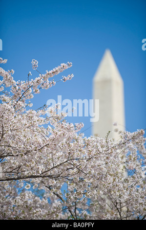 Washington Monument with cherry blossoms - Stock-Bilder