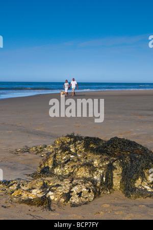 Dog Walking Reighton Sands