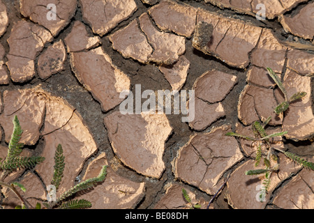An environmental climate change concept shot of cracked dry earth. - Stock Image