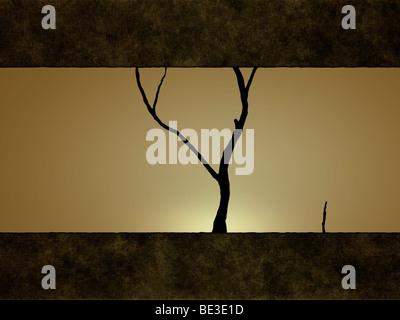 Illustration of a tree against a sunset. - Stock-Bilder