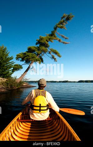 Man, Canoe, Pine, Kahshe Lake, Muskoka, Ontario - Stock Image