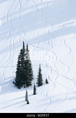 Trees and snow, Paradise Valley; Mount Rainier National Park, Washington. - Stock Image