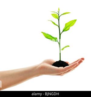 plant in man hand isolated on white - Stock-Bilder
