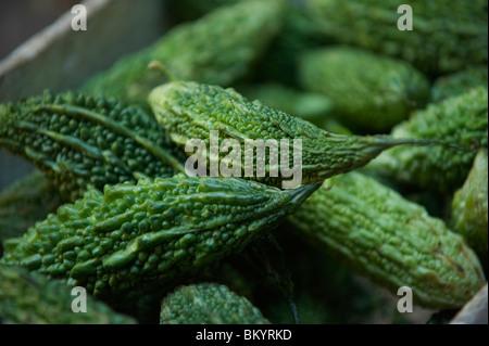 Bitter melon - Stock Image