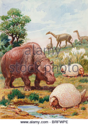 the toxodon glyptodon and macrauchenias lived in south america stock image