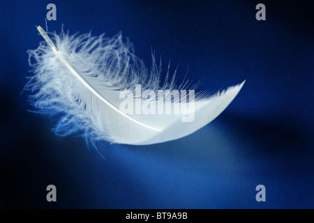White feather - Stock-Bilder