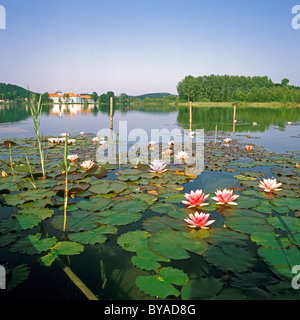 Seeon Abbey, Seeon-Seebruck, Chiemgau, Upper Bavaria, Bavaria, Germany, Europe - Stock Image