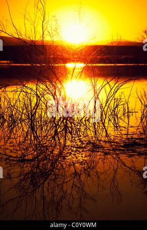 Sunset a lake - Stock Image