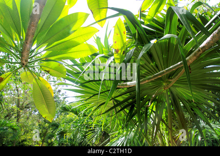 jungle rainforest atmosphere green background central America - Stock-Bilder