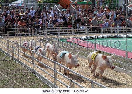 Plant City Florida Florida Strawberry Festival pig race audience - Stock Image