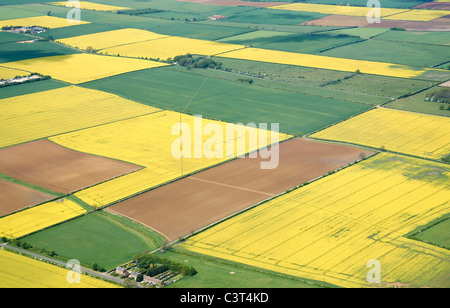 Fields of Oil Seed Rape, from the air, Lincolnshire, Easter England - Stock-Bilder