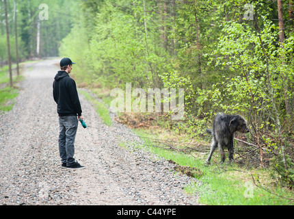 Adult bloodhound irish puppy wolfhound young