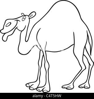 Dromedary Camel Hoof Stock Photos Dromedary Camel Hoof Stock