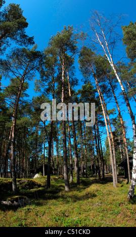 Tree Huts Stock Photos Amp Tree Huts Stock Images Alamy