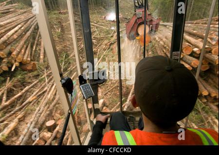 Operator working processor hoisting cutting 2nd - Stock Image