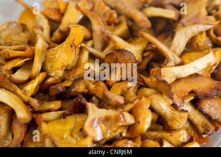 Cooked chanterelle - Stock-Bilder