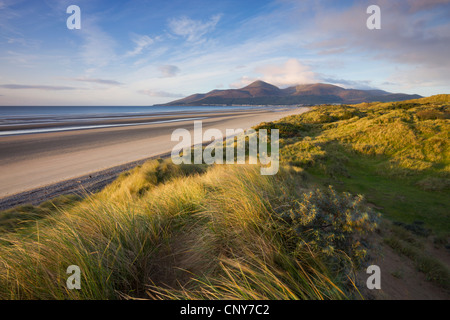 Sand dunes at Murlough alongside Dundrum Bay, with the Mountains of Mourne in the background, County Down, Northern - Stock-Bilder