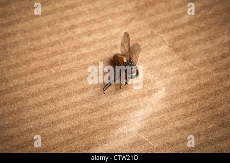 essay on house fly Get rid of house flies, blow flies, drain flies, fruit flies, and other nuisance flies with our selection of professional grade fly control products.
