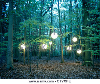 Lanterns hanging from trees in forest - Stock-Bilder