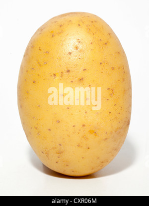 Raw potato - Stock Image