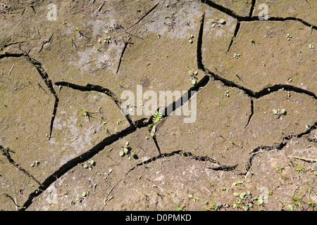 dry land - Stock Image