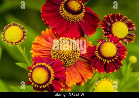 artistic flowers - Stock-Bilder