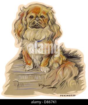 Dogs  Pekingese  Dawson - Stock Image
