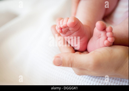 Mid adult woman holding baby girl's feet, close up - Stock-Bilder