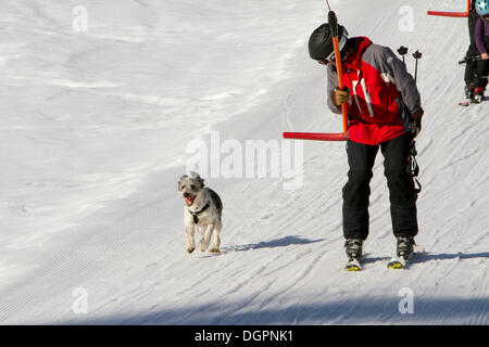 Man on a button lift with his dog running next to him, Pillerseetal valley, St.Jakob i. H., Tyrol, Austria, Europe - Stock Image