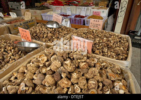 Mushrooms ontario canada stock photos mushrooms ontario for Asian cuisine sudbury ontario