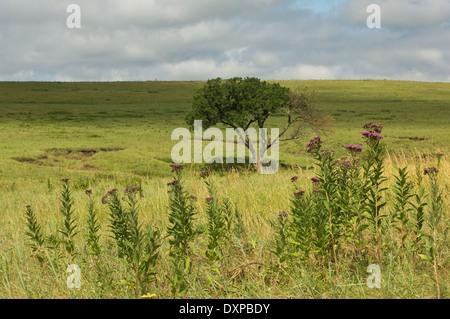 Landscape of the Tallgrass Prairie National Preserve, Kansas. - Stock-Bilder
