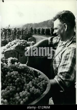 Feb. 25, 2012 - Beginning of the vintage; Soon the time is coming, for the vintage in the German wine districts - Stock Image