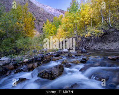 Mcgee Creek and fall colored aspens, Inyo National Forest, Eastern Sierra Nevada mountains, California - Stock-Bilder