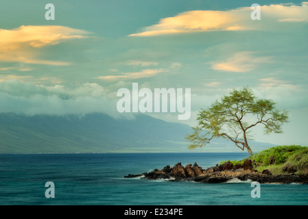 Lone tree and ocean at sunset. Maui, Hawaii - Stock Image