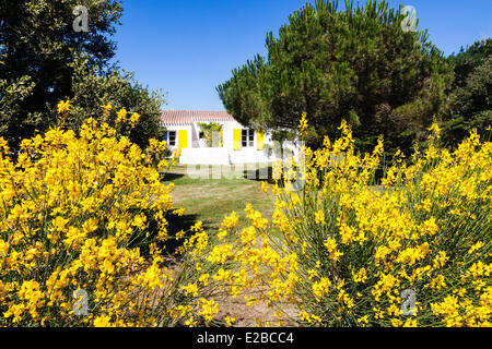 Broom Shrub Stock Photos & Broom Shrub Stock Images - Alamy
