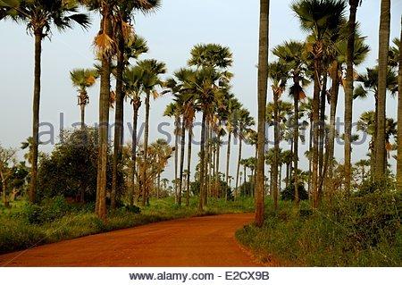 Senegal Sine Saloum landscapes - Stock Image