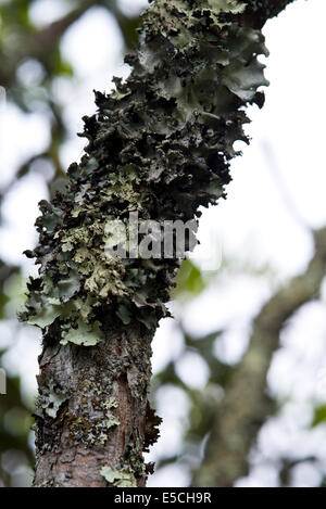 Outstanding Nature Takeover Stock Photos  Nature Takeover Stock Images  Alamy With Entrancing Lichen Growing On Trees Near The Blue Ridge Parkway In Western North  Carolina  Stock Image With Adorable Ideas For A Garden Also Garden City Uk In Addition Real Ale Covent Garden And Rhs Garden Centre As Well As Garden Centre Lancaster Additionally Cutty Sark Gardens From Alamycom With   Entrancing Nature Takeover Stock Photos  Nature Takeover Stock Images  Alamy With Adorable Lichen Growing On Trees Near The Blue Ridge Parkway In Western North  Carolina  Stock Image And Outstanding Ideas For A Garden Also Garden City Uk In Addition Real Ale Covent Garden From Alamycom