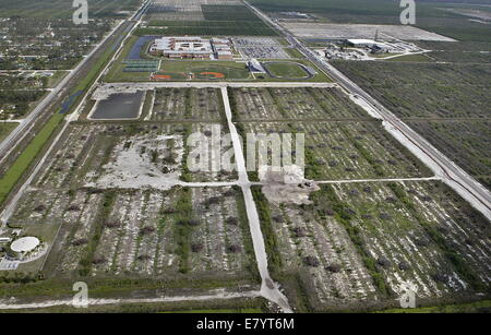 Apr 18, 2006 - West Palm Beach, Florida, U.S. - Part of the Callery Judge orange groves located south of the Seminole - Stock-Bilder