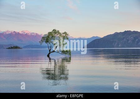 New Zealand, Otago, View of Lake Wanaka - Stock Image